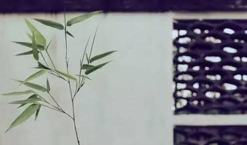 树木微信图片大全