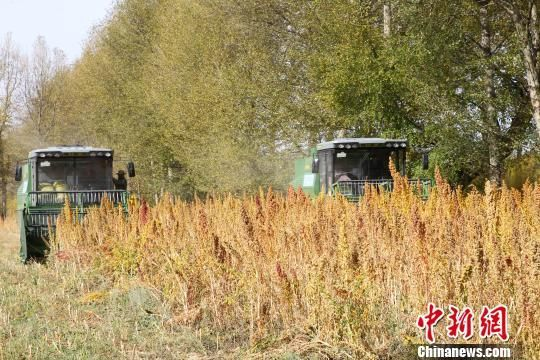 烟台市积极部署三秋农机化生产